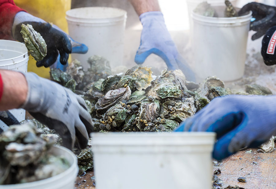 21st Annual Shuckin' in the Park Oyster Roast Canceled